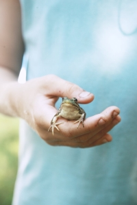Close up of child holding a frog